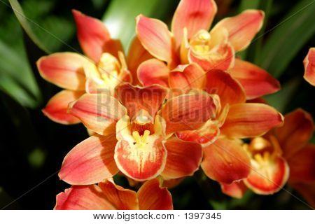 Orchideen Schönheit in voller Blüte