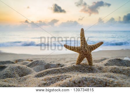 Starfish on the beach at sunrise in Thailand
