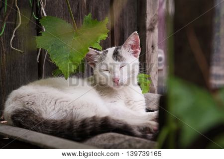 Sleepy Cat Outdoors