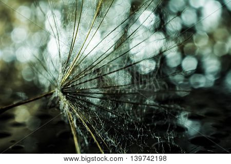 Dandelion abstract bokeh background with water drops . Shallow depth of field.