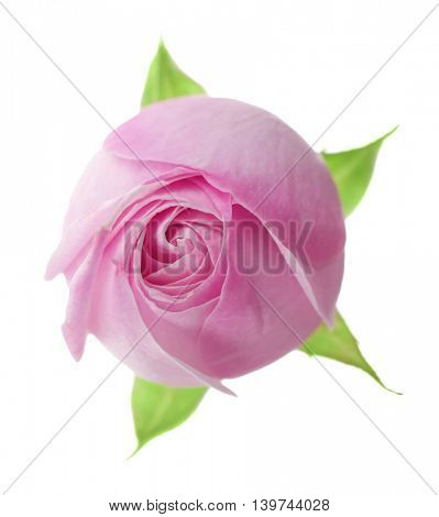 Beautiful pink rose bud isolated on white