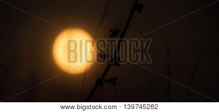Moon with straw of grass in summer night