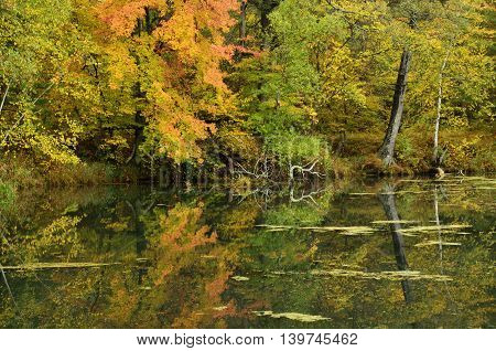 Fall Colors Reflected on a Lake on a Calm Day