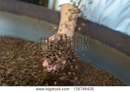 woman choosing coffee grains
