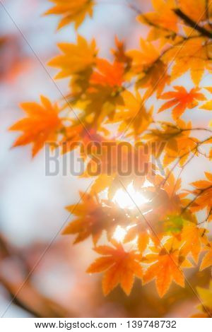 autumn trees out of focus, natural bokeh abstract blur background