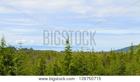 scenic view of pine tree tops and sky