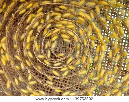 Yellow cocoon in the bamboo cage background