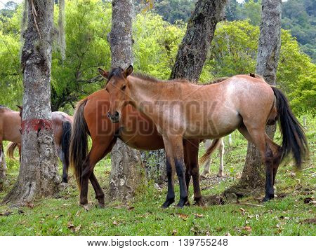 Detail, horse in the Great Valley, Merida, Venezuela.