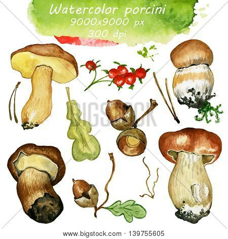 Wild mushrooms. Hand drawn watercolor painting isolated over white background. Food Clipart illustration. boletus. porcini