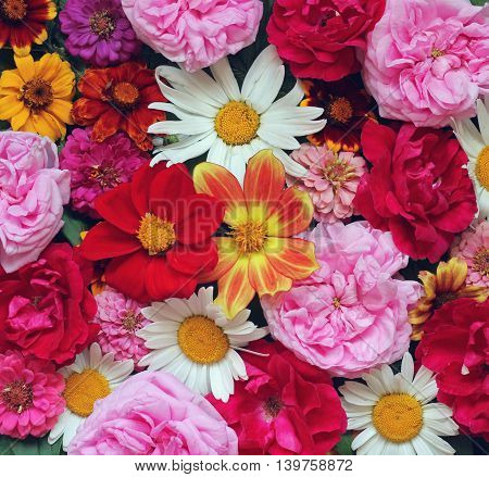 Colorful background of garden flowers for congratulation or greeting cards. Rose Daisy Dahlia.