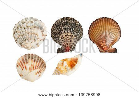 Brown and colorfull seashells on white background