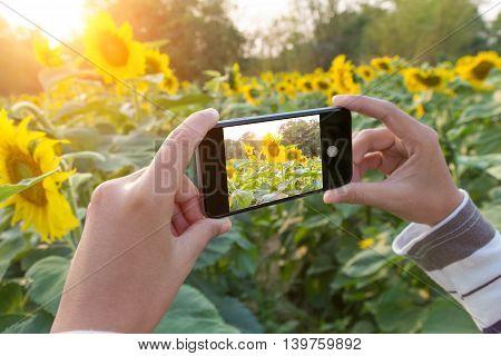 close up hand using phone taking flower photo