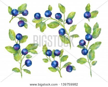 Watercolor blueberries collection on a white background. Hand drawn set of forest berries with leaves