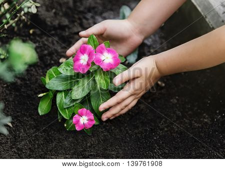 Children hands around green young flower plant.