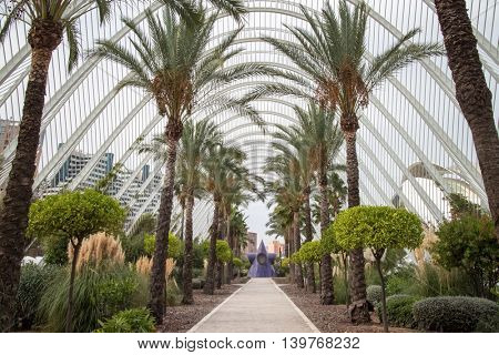 Palm alley in the City of Arts and Sciences