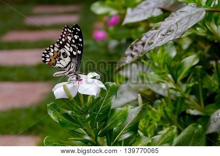 Beautiful butterfly on white flower. Nature background