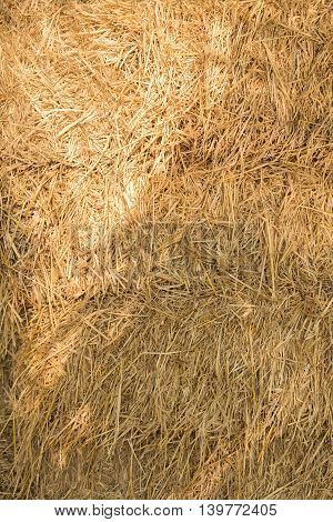 Dry yellow natural hay closeup texture Background