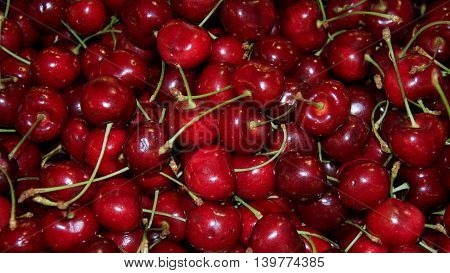 Closeup of large group of bright red cherries with long green stems.