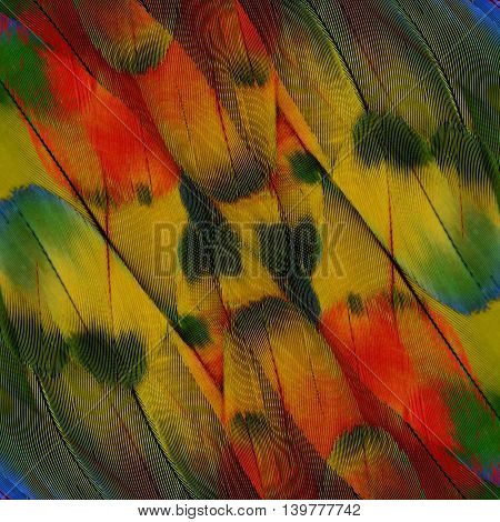 Maginificent of Red Yellow and Green background of Scarlet Macaw parrot's wing the beautiful texture