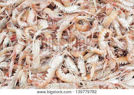 Fresh Shrimps on display in fishermen market. Background texture
