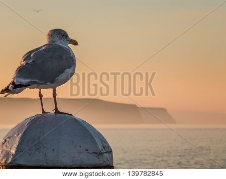 Whitby seascape and seagull in Yorkshire England UK
