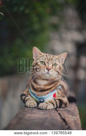 Close up portrait of a cat sitting on a log.