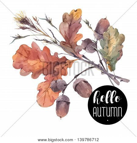 Autumn vector vintage bouquet of twigs, yellow oak leaves and acorns. Botanical illustrations. Greeting card. Isolated on white background