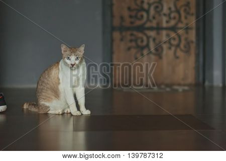 Close up portrait of a cat sitting on floor