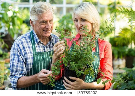 Couple holding potted plant while working at greenhouse