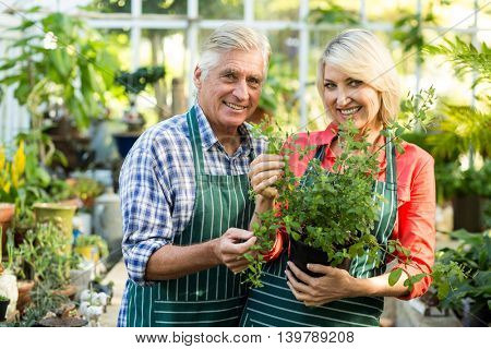Happy couple holding potted plant while standing in greenhouse