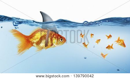 Gold fish with shark flip . Mixed media