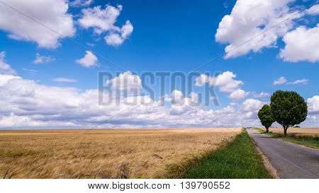A road passing through a wheat field.