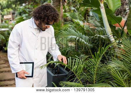 Male scientist examining plants while holding digital tablet at greenhouse