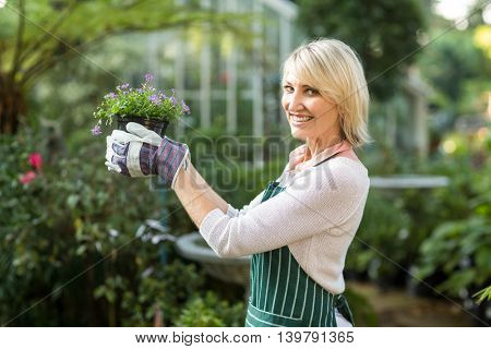 Portrait of mature female gardener holding potted flowering plant at greenhouse