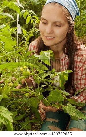 young girl looks at the bush with unripe tomatoes