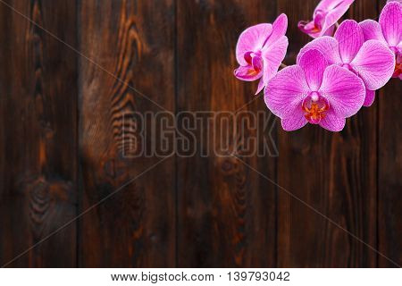 Pink orchid flower on a dark wooden background copy space