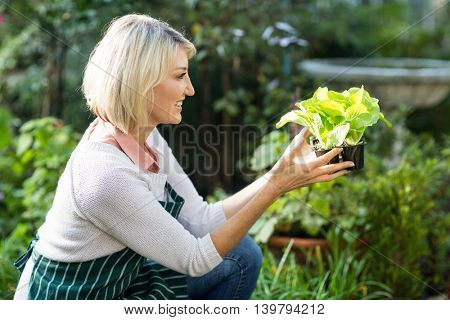 Side view of female gardener holding potted plant while working at greenhouse