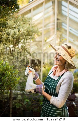 Side view of female gardener watering plants at greenhouse