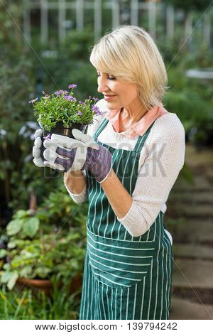 Mature female gardener smelling potted flowers at greenhouse