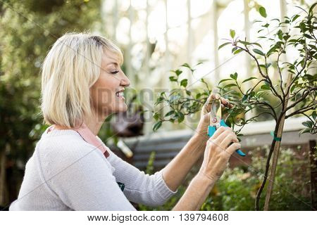 Side view of female gardener pruning plants outside greenhouse
