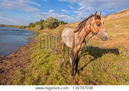 beautiful sad horse standing on the river shore