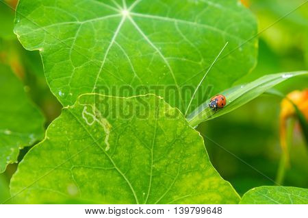 Ladybird Sitting On Plant