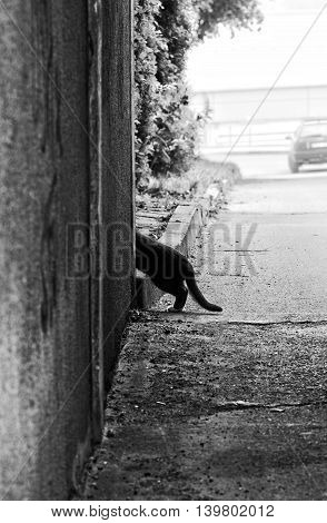 Curious cat in the street, black and white photo. Humorous photo of curious street cat in B&W photo. Street cat