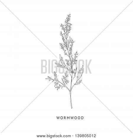 Wormwood Medical Herb Hand Drawn Realistic Detailed Sketch In Beautiful Classic Herbarium Style On White Background