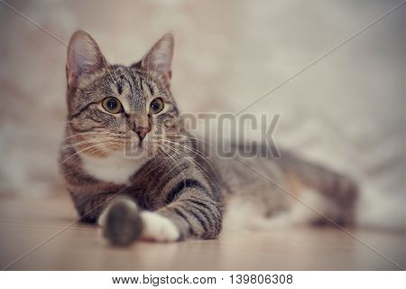Portrait of a striped cat with yellow eyes.