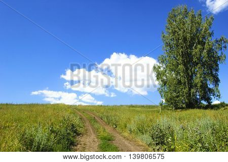 Field dirt road. Blue sky and clouds.