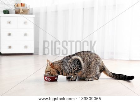 Cute cat eating at home