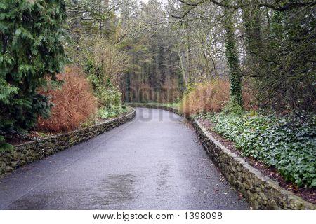 Irish Country Road