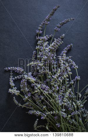 Bunch Of Fresh Lavender