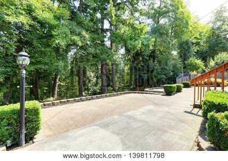 Backyard View With Concrete Floor And Lots Of Fir Trees Around.